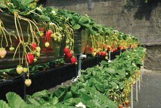 山頂果園農場