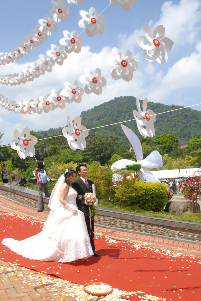 Wedding under blossoming Tung trees