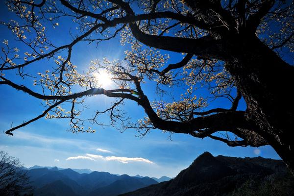 佳作-江泛舟-台灣樹眺雪霸