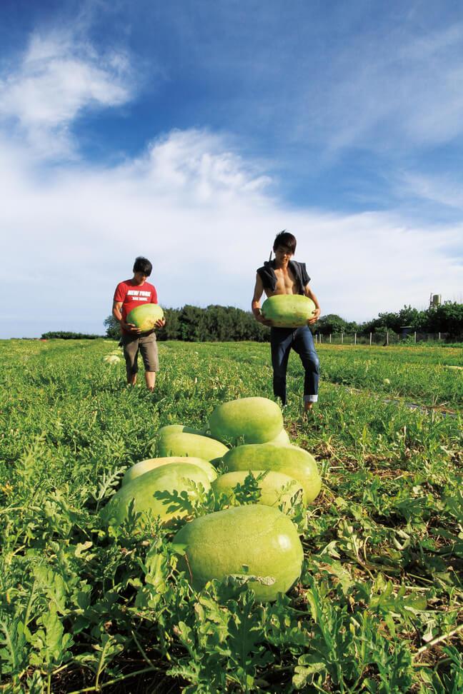 Miaoli Houlong Watermelon Festival