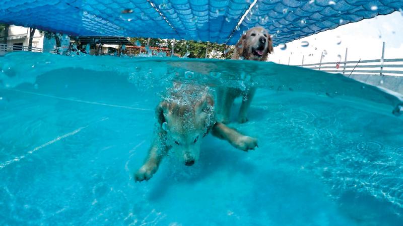 狗狗水世界 水質清澈潔淨的戲水池