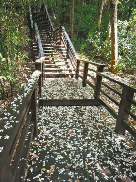 桐海秘境步道